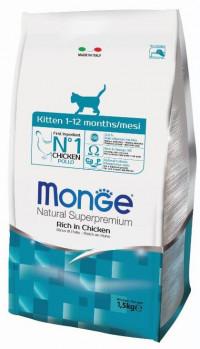 monge kitten — ЗооНорка
